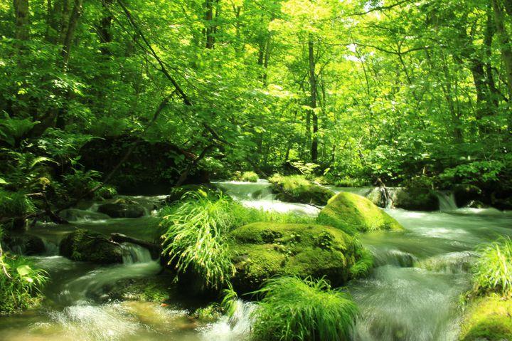 暑さ忘れる夏の旅。この夏行きたい日本国内の美しき「緑の避暑地」10選