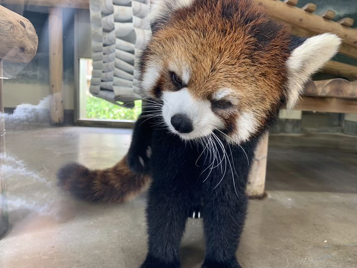 隠れスポットあり!もっと動物が好きになる!九州の動物スポット15選 ...
