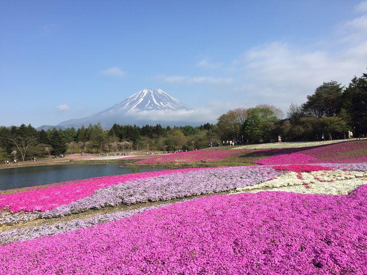美しいお花に思わず心奪われる♡GWに行きたい山梨・長野・岐阜の花畑まとめ