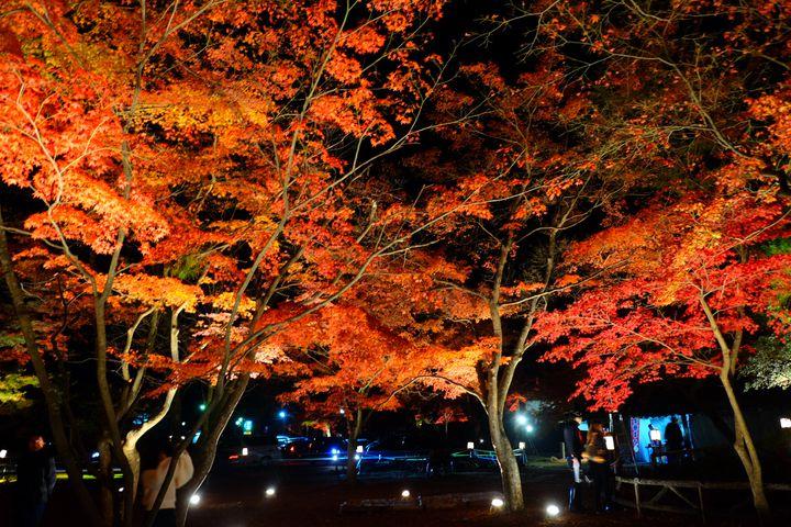 【2019年】秋デートを絶景で。紅葉ライトアップのある関東紅葉スポット11選
