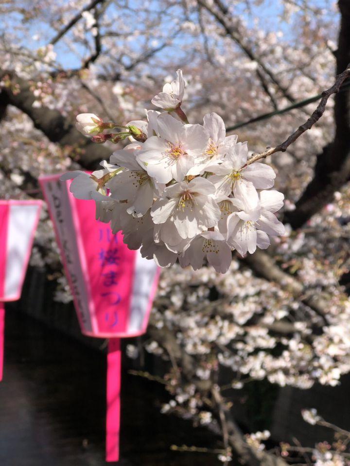 働き者東京OLさん注目!最低限抑えたい4月の「To Doリスト」をご紹介