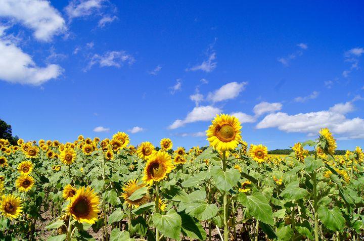 この夏行きたい絶景No.1が決定!国内の夏の絶景ランキングTOP10