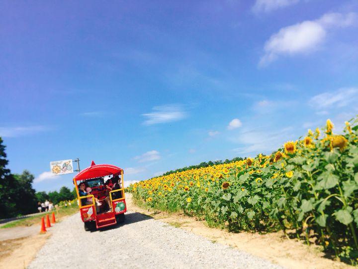 今年の夏は国内女子旅!夏休みに行きたいフォトジェニックな旅行先12選