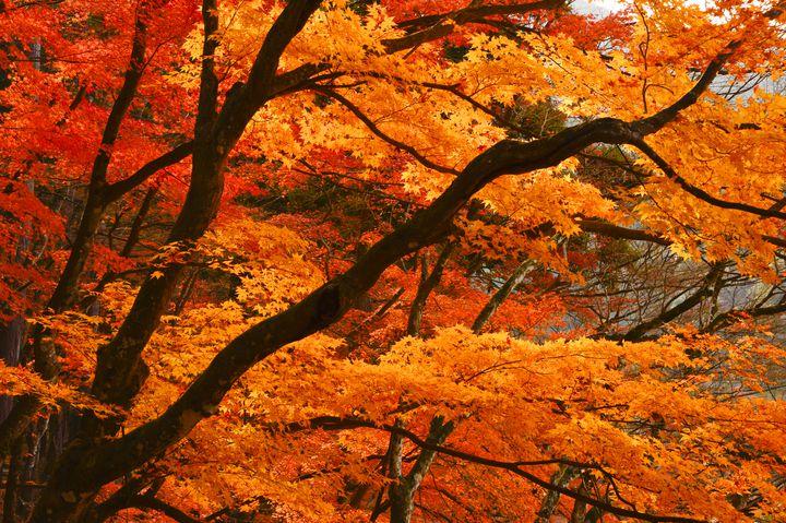 平成最後の秋を心に刻もう!全国の秋におすすめのおでかけスポット7選