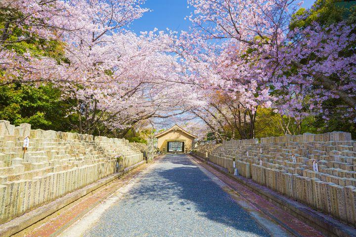 「黄金富士」と呼ばれている黄金山の魅力に迫る!