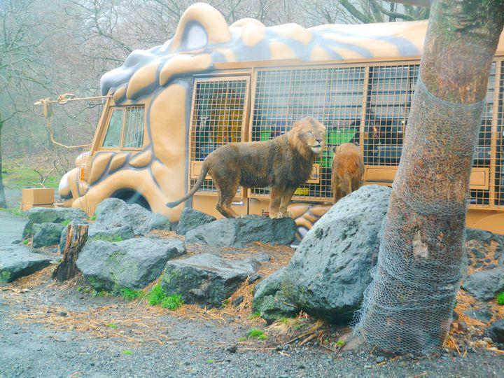 野生動物が目の前に!大迫力の「富士サファリパーク」でしたい5つのこと