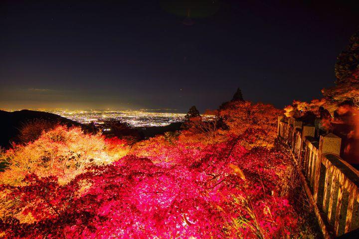 秋夜に色づく紅葉に恋をした。関東近郊の紅葉ライトアップ10選【2019】