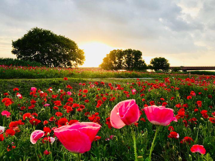 ふわっと香る春の訪れを君と感じたい。関東地方のお花畑スポット10選