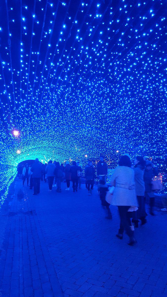 【終了】光の世界に包まれる。福井県・金ヶ崎緑地でイルミネーションイベント「ミライエ」開催