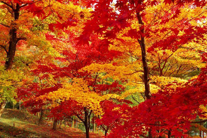 今年の秋はここで決まり!兵庫の紅葉スポット10選