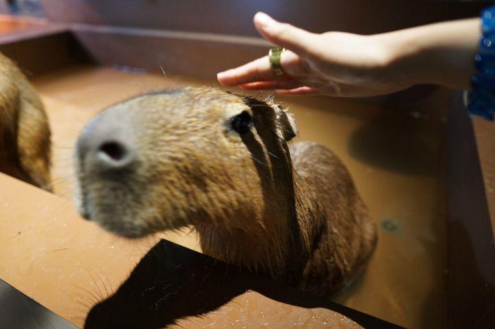 オービィ横浜でしたい5つのこと!動物とのふれあいとデジタルエンターテイメントを。