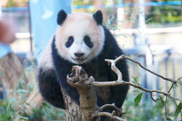 自宅でオンライン動物園してみない?休園中の様子を発信している動物園10選