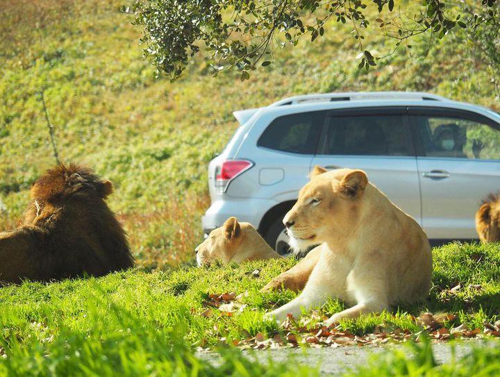 思いっきりはしゃいじゃおう!大人も楽しめる関西の動物園ランキングTOP15