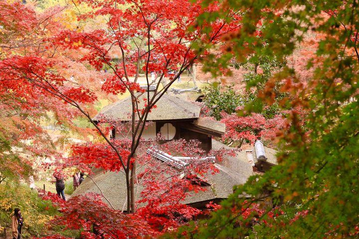 紅葉狩りや食べ歩き!横浜の秋に行きたいおすすめお出かけスポット12選