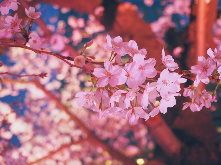 """夜だからこその美しさ。17時から行きたい""""春""""のデートスポット7選"""