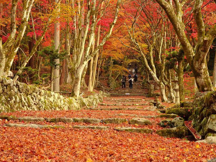 ひとり旅×秋の絶景。カメラ片手に出かけたい秋の絶景ひとり旅スポット12選