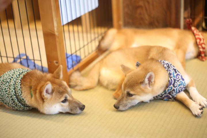 """モフモフに触れて癒されたい。東京都内にある癒しの""""動物カフェ""""7選"""