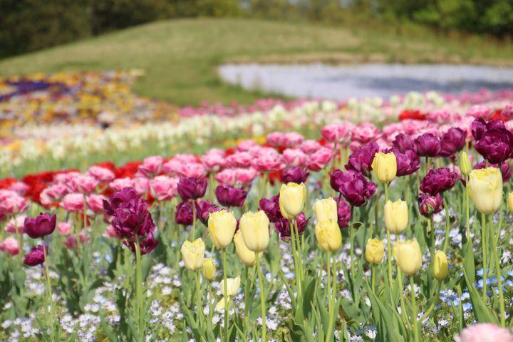 【休園中】香川・国営讃岐まんのう公園で、たくさんの花に囲まれる。「春らんまんフェスタ」開催