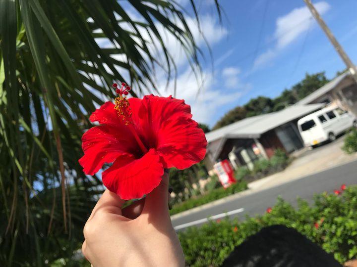 日本のハワイといえばここ!「八丈島」で過ごす週末南国旅行で夏を先取りしよう