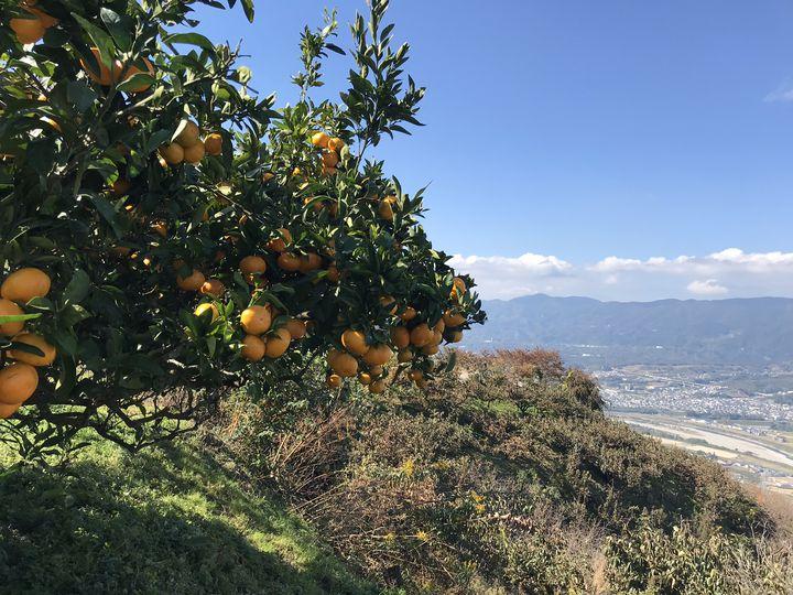 歴史に眠る謎や自然を楽しむならココ!和歌山県橋本市を楽しむスポット6選