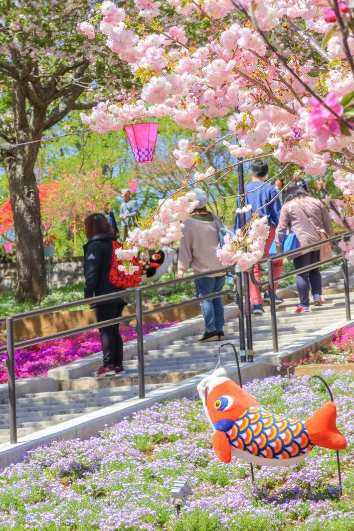 """今年の春はこの桜!奇跡のように美しい""""八重桜""""が咲き誇る名所7選"""