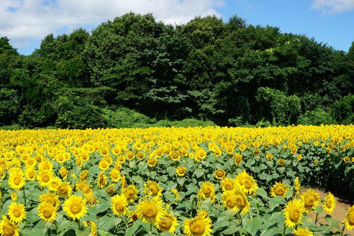"""暑い夏は絶景で癒されよう!関東の""""夏にしか見られない""""絶景10選はこれだ"""