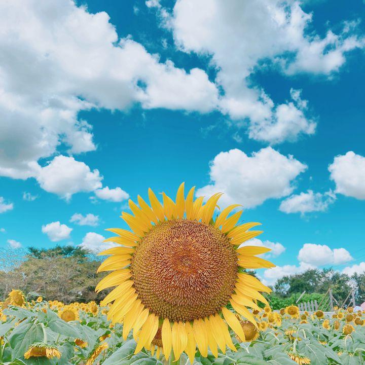 夏はあなたをどこへ連れていく?関東近郊のおすすめ日帰りおでかけスポット11選