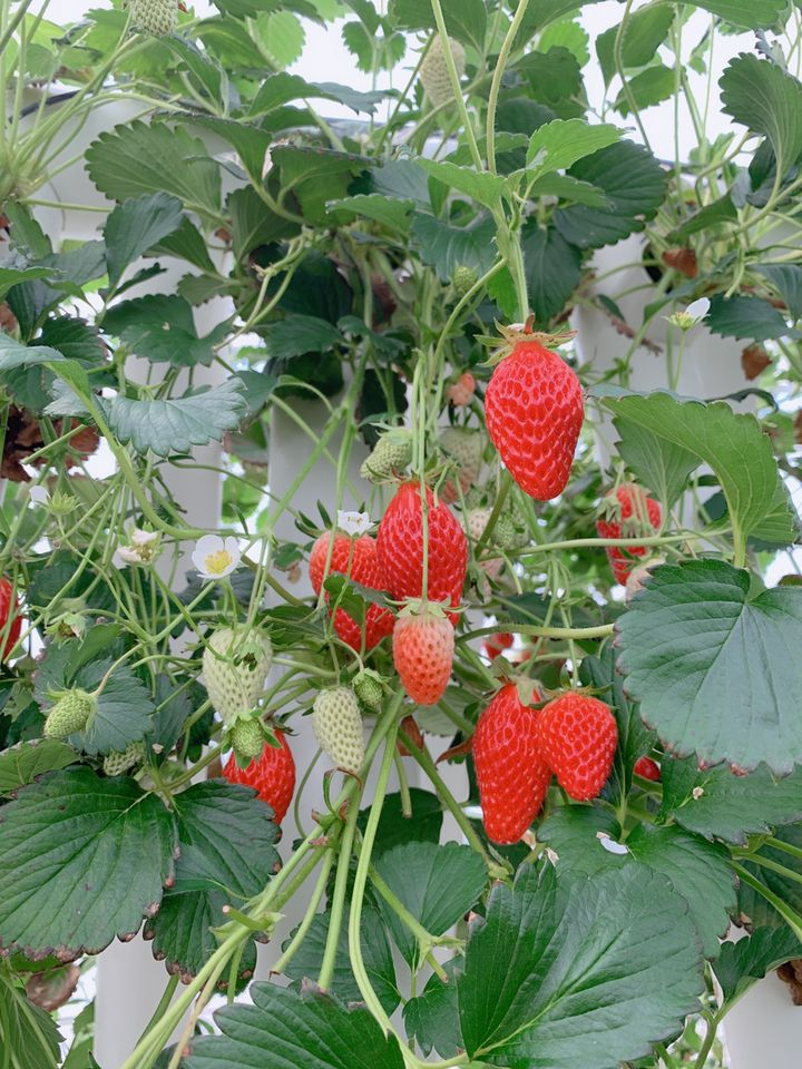 岩手県で果物狩りができるおすすめスポットはここだ!人気の果樹園7選