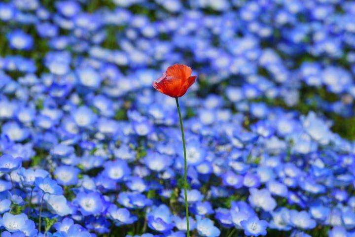 花が織りなす春の絶景!ゴールデンウィークに行きたい花の絶景スポット7選はこれだ
