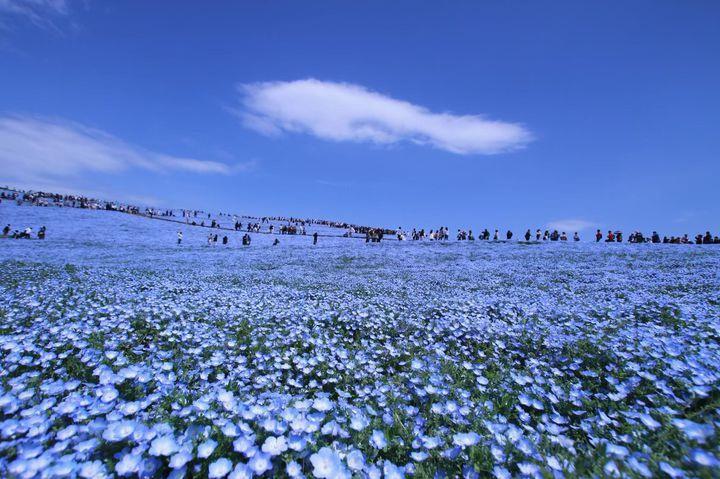全部知ってる?米国CNNが選んだ『日本の最も美しい場所』31選