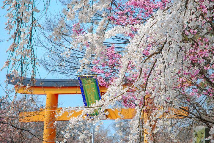 """きっと忘れられない春になる。大切な人と見たい""""京都の桜の名所""""15選"""
