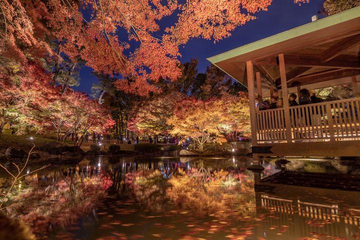 秋夜に色づく紅葉に恋をした。関東近郊の紅葉ライトアップ7選【2020】