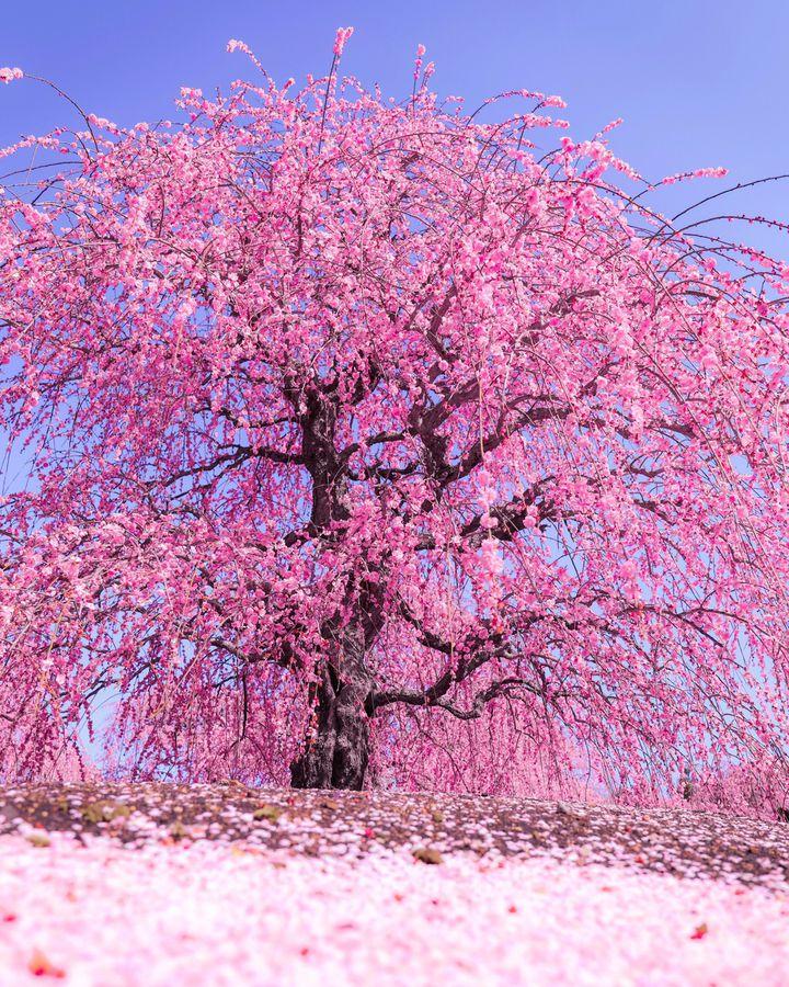"""冬も春も楽しめる贅沢な季節!関西近郊の""""今週したいこと""""7選"""