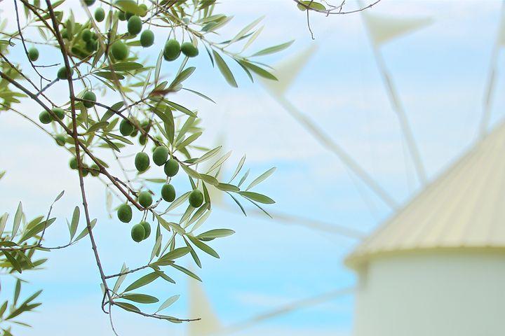 日本のオリーブの始まり!香川県「小豆島オリーブ園」でしたい5つのこと