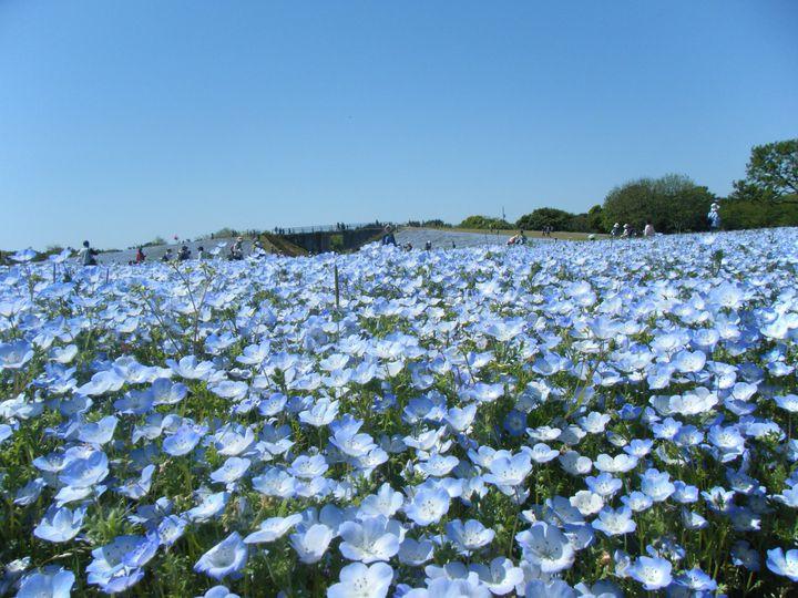 福岡県民の穴場観光スポット!「海の中道海浜公園」でしたい7つのこと