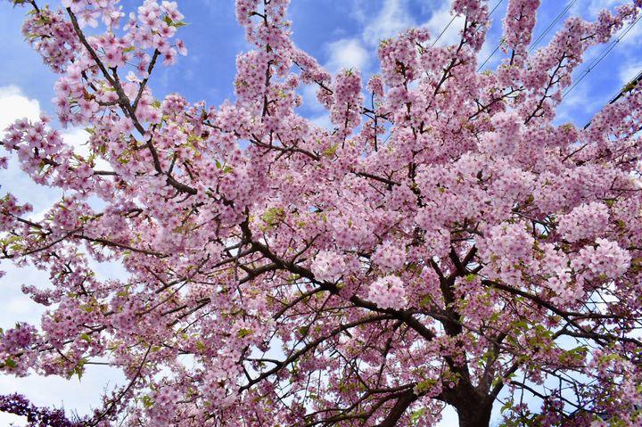 """見て、食べて、春を感じよう。関西地方の""""今週したいこと""""7選"""