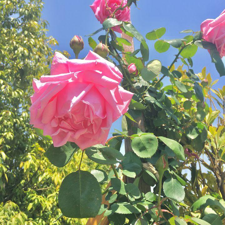 お出かけにぴったりの季節!東京近郊の5月に見頃を迎えるお花スポット8選