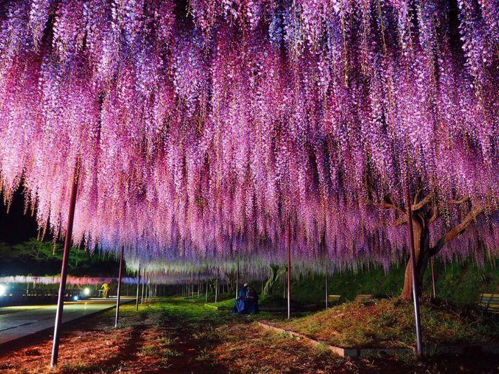 《関西》絶景を巡る旅!人生で一度は見たい関西地方の絶景スポット15選