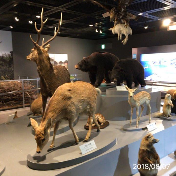 子供から大人まで楽しめる!「兵庫県立 人と自然の博物館」でしたい5つのこと