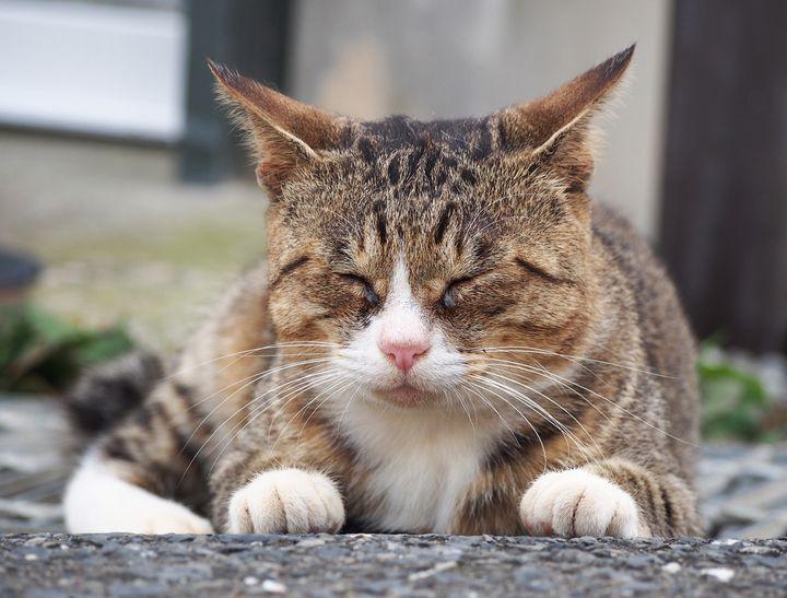 空前の猫ブーム!宮城県にある「田代島」でたくさんの猫に癒されたい