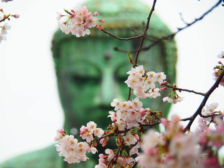 古都のお花見は一味違う!「鎌倉」の桜スポット10選を巡ろう