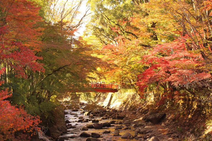 隠れた紅葉の絶景スポット。伊豆・修善寺を満喫する一泊二日プランはこれだ