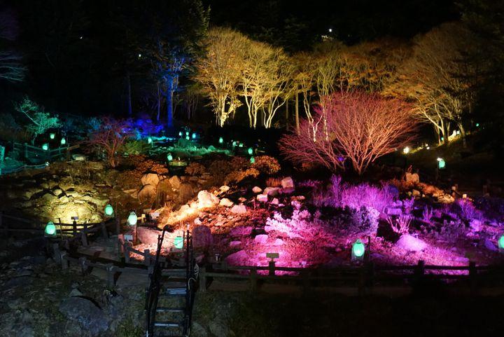 """【終了】""""紅葉と夜のアート作品""""が鑑賞できる。神戸で「ザ・ナイトミュージアム」開催"""