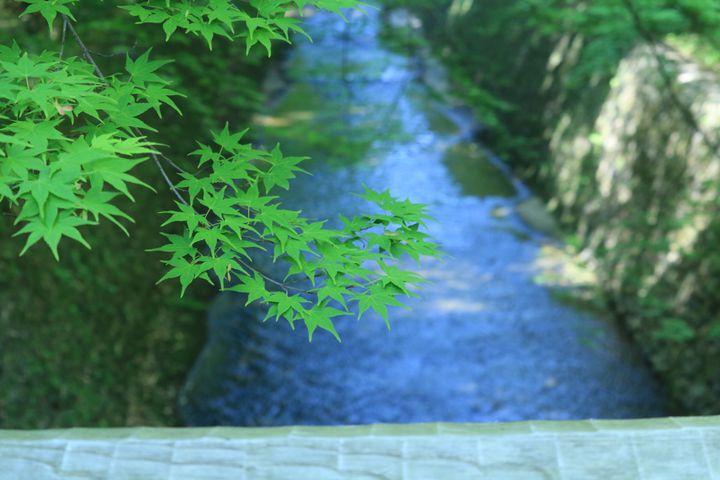 5月しか見られない絶景を。5月に行くべき京都の観光スポット10選