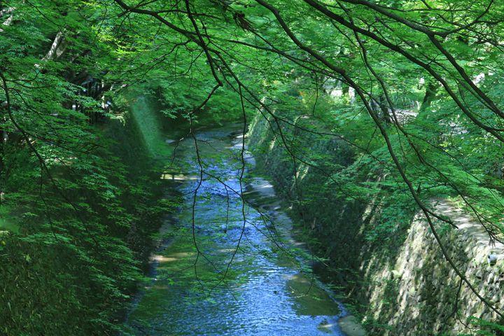 """しんとした京都を、ひとりじめ。""""朝イチで行きたい""""京都の朝観光スポット8選"""