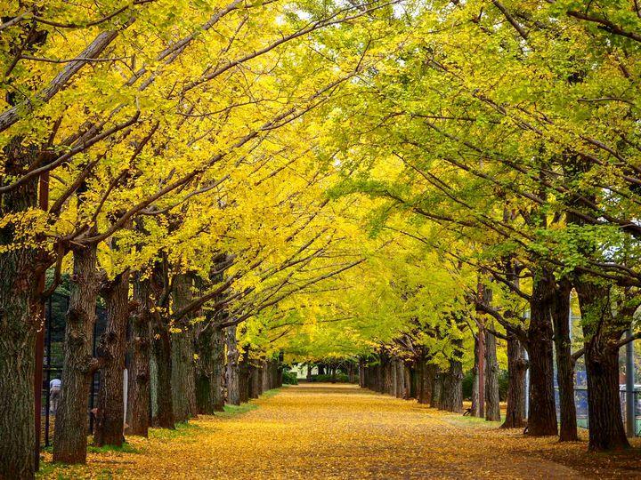 秋はピクニックデートに行こう!東京の紅葉スポットと周辺のテイクアウトグルメ10選