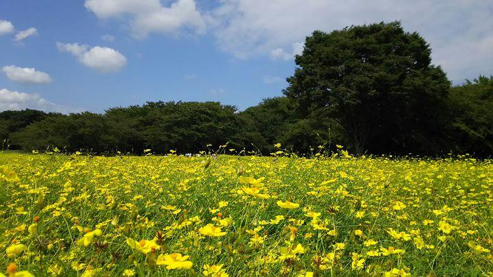 秋の味覚に秋の絶景。関東地方で今週したい8つのことはこれだ!