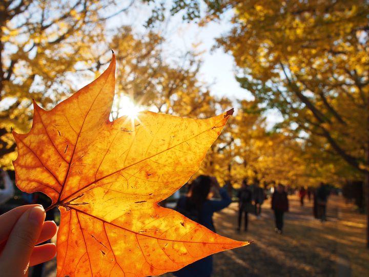 """この秋行きたい!紅葉とピクニックが楽しめる東京都内の""""おすすめ公園""""12選"""