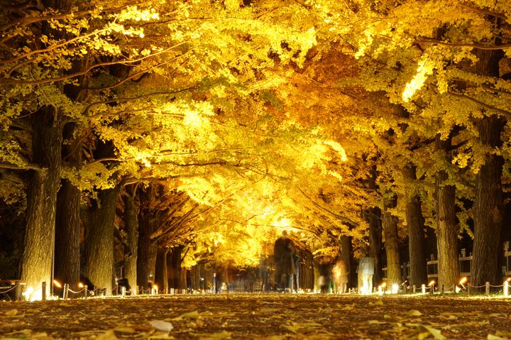 本格的な秋到来!秋を感じる関東地方で今週したいこと8選
