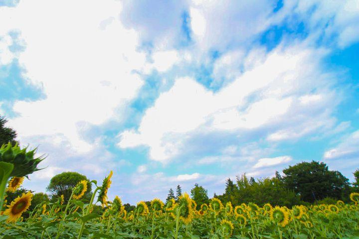 最高の夏、過ごしていますか?今年の夏が終わる前にやりたいの8つのこと《関東編》